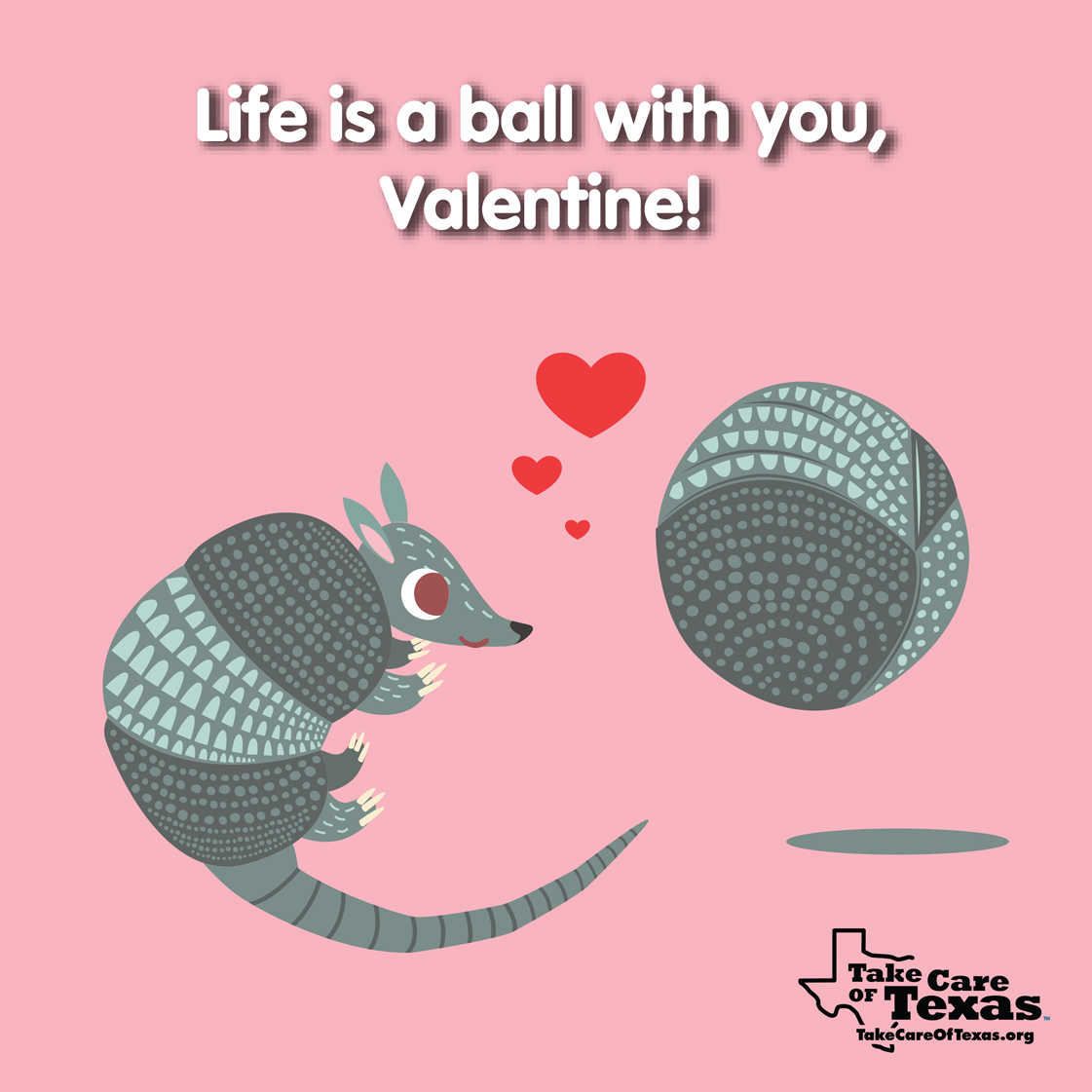 Armadillos rolling around in love