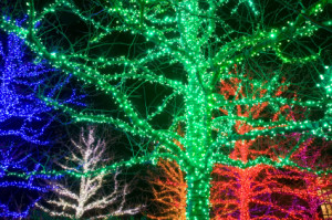 trees decorated with green, blue, and red lights