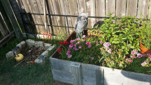 small compost pile and garden